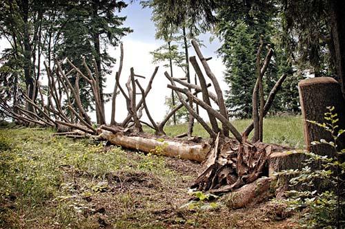 mansfield-tree-service-pro-guy-fallen-tree