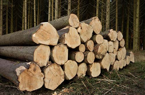 mansfield-tree-service-pro-guy-log
