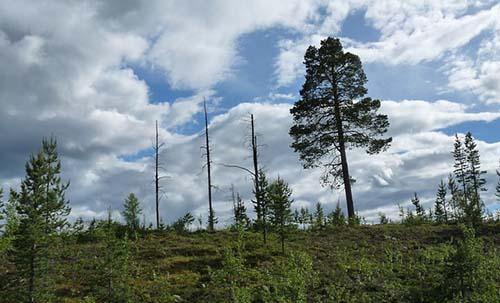 mansfield-tree-service-pro-guy-trees